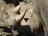 Eastern Black Rhinoceros from the Sedgwick County Zoo, Kansas Photographic Print by Joel Sartore