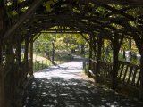 Curved Walkway in Central Park Photographic Print by Stacy Gold