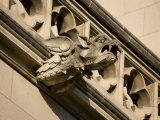 Dragonlike Gargoyle, Washington, D.C. Photographic Print by Stephen St. John