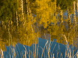 Fall Colors Reflected in a Trout Pond at Sunset, Colorado Photographic Print by Michael S. Lewis