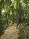 Footpath Trail Leading Through Rain Forest, Belize Photographic Print by James Forte