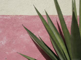 Green Plant against Painted Wall, Cabo San Lucas, Mexico Photographic Print by Gina Martin