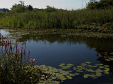 Fresh Water Pond Surrounded by Summer Foliage, Groton, Connecticut Photographic Print by Todd Gipstein