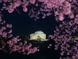 Jefferson Memorial at Night, Seen Through Cherry Blossoms, Washington, D.C. Photographic Print by Kenneth Garrett