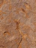 Detail of the Oxidised Rust Sandstone Surface of Ayres Rock Aka Uluru, Australia Photographic Print by Jason Edwards