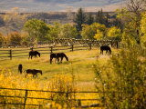 Horses Grazing in the Late Afternoon on the Home Ranch, Colorado Photographic Print by Michael S. Lewis