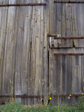 Dilapidated Antique Timber Doors and Bolts, on a Wooden Barn, Australia Photographic Print by Jason Edwards