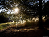 Evening Sun Backlights Serene Local Parkland, Silver Spring, Maryland Photographic Print by Stephen St. John