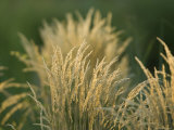 Grass at the Sedgwick County Zoo, Kansas Photographic Print by Joel Sartore