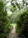 Flooded Path at Manoa Falls, Honolulu, Hawaii Photographie par Stacy Gold
