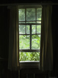 Looking Out Through a Weathered Window to Lush Green Foliage Fotoprint van Todd Gipstein