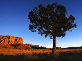 Pine Tree in Barren Land, New Mexico Fotografie-Druck von Brimberg & Coulson
