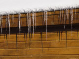 Detail of Icicles Melting in the Sun in Truckee, Lake Tahoe, California Photographic Print by Rich Reid