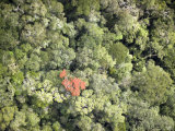 Remnant Forest in Mindongy du Sud National Park, Se Madagascar Photographic Print by Michael Fay