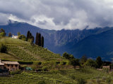 Farmhouse on a Vineyard-Covered Hillside with Mountains in Background, Asolo, Italy Photographic Print by Todd Gipstein