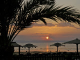 Dahab, Egypt, Middle East:Silhouette of Palm Tree over the Sunset Photographic Print by  Brimberg & Coulson