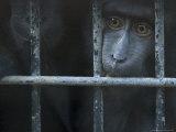 Monkey at the Omaha Zoo, Nebraska Photographic Print by Joel Sartore