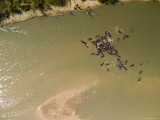 Pod of Hippos in the Luangwa River, Thousands Live in This River, Zambia Photographic Print by Michael Fay