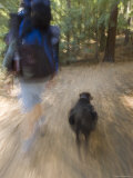 Man and his Dog Backpacking on Pine Ridge Trail, California Photographic Print by Rich Reid
