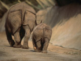 Indian Rhinoceros and Her Baby at a Zoo, San Diego, California Photographic Print by Michael Nichols