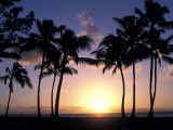 Palm Trees in Silhouette During Sunset on Oahu, Hawaii Photographic Print by Richard Nowitz