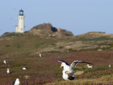 Lighthouse and Western Gulls on Anacapa Island, California Photographic Print by Rich Reid