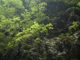 Dappled Light, Forested Shore of Lesser Three Gorges, Wushan, China Photographic Print by David Evans
