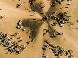Livestock Gather at This Deep Radial Well in the Saharan Steppe, Chad Photographic Print by Michael Fay