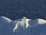Polar Bear Sitting on Iceberg, Svalbard Islands, Norway Photographic Print by  Brimberg & Coulson