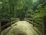 Concrete Footbridge, Rock Creek Park, Washington, D.C. Photographic Print by Peter Krogh