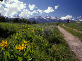 Road Leading Towards the Tetons in Grand Teton National Park, Wyoming Photographic Print by Richard Nowitz