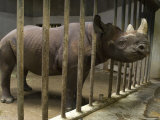 Rhino at the Sedgwick County Zoo, Kansas Photographic Print by Joel Sartore