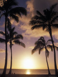 Palm Trees in Silhouette at Sunset on Oahu, Hawaii Photographic Print by Richard Nowitz