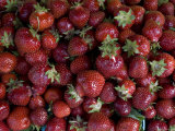 Local Strawberries for Sale at a Road-Side Market Photographic Print by Todd Gipstein