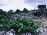 Ruins at Tulum, Mexico Photographic Print by Bill Hatcher