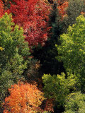 Deciduous Trees in their Autumn Glory Photographic Print by Kate Thompson