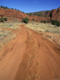 Red Dirt Road Through the Pinyons, Sagebrush and Red Rock, New Mexico Photographic Print by Rich Reid