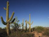 Saguaro Cactus Scenic Photographic Print by George Grall