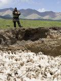 Nomadic Shepherd Looks over his Flock of Sheep, Qinghai, China Photographic Print by David Evans