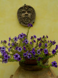 Potted Purple Petunias on a Wooden Bench against a Yellow Wall, Tuscany, Italy Photographic Print by Todd Gipstein