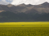 Mountains and Rapeseed Fields, Qinghai, China Photographic Print by David Evans