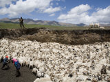 Nomadic Sheep Herding Family and their Flock of Sheep, Qinghai, China Photographic Print by David Evans