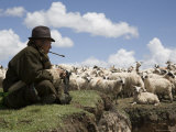 Nomadic Sheep Herder and his Flock, Qinghai, China Photographic Print by David Evans