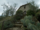 Prickly Pear Cactus at the Bottom of a Stairway to a Tuscan Villa, Tuscany, Italy Photographic Print by Todd Gipstein