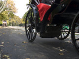 Low Angle View of Horse-Drawn Carriages in Central Park Photographic Print by Stacy Gold