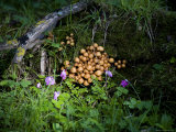 Mushrooms and Bluebells on a Mossy Forest Floor, Qilian Mountains, China Photographic Print by David Evans