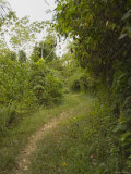 Overgrown Footpath Leading Down Jungle Trail with Sky Above, Belize Photographic Print by James Forte