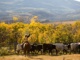 Roping Steers at the Home Ranch, Colorado Photographic Print by Michael S. Lewis