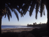 Ledbetter Beach Framed by Two Palm Trees, California Photographic Print by Rich Reid