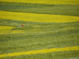 People in a Rapeseed Field, Qinghai, China Photographic Print by David Evans